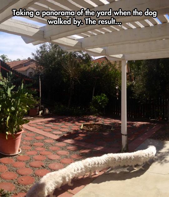Dogerpillar-in-the-backyard8230-428cf1